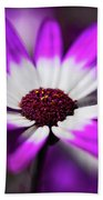 Purple And White Daisy  Beach Towel
