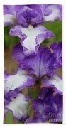 Purple And White Iris Layers Beach Towel