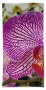 Purple And White Orchid Beach Towel