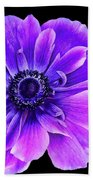 Purple Anemone Flower Beach Towel