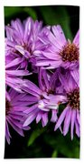Purple Aster Blooms Beach Towel