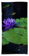 Purple Blue  Lily Beach Sheet