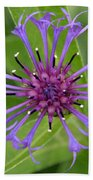 Purple Centaurea Montana Flower Beach Towel