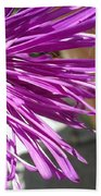 Purple Chinese Aster Beach Towel