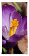 Purple Crocus Beach Towel