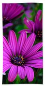 Purple Daisies Beach Towel