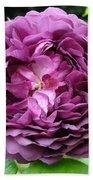 Purple English Rose Beach Towel