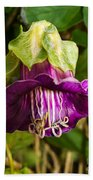 Purple Flower Of The Vine Known As Cathedral Bells Beach Towel