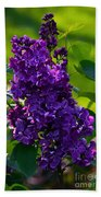 Purple French Lilac Beach Towel