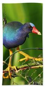 Purple Gallinule Beach Towel