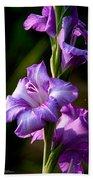 Purple Glads Beach Towel