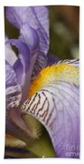 Purple Iris Closeup Beach Towel