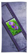 Purple Iris Passion Beach Towel