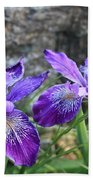 Purple Irises With Gray Rock Beach Towel