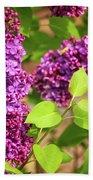 Purple Lilac Beach Sheet
