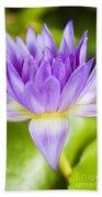 Purple Lotus Blossom Beach Towel