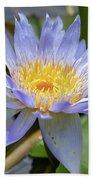 Purple Water Lily Flowers Blooming In Pond Beach Towel