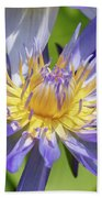 Purple Water Lily Flowers Blooming In Pond Beach Sheet