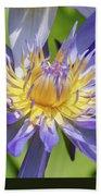 Tropical Purple Water Lily Beach Towel