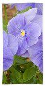 Purple Petunia  Beach Towel