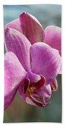 Purple Phalaenopsis Orchid Beach Towel
