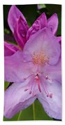 Purple Rhododendron Beach Towel