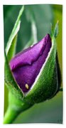 Purple Rose Bud Beach Towel