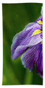 Purple Siberian Iris Flower Closeup Beach Towel
