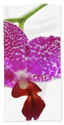 Purple Spotted Orchid On White Beach Towel