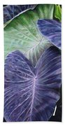 Purple Taro Beach Towel