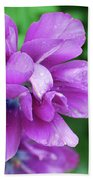 Purple Tulip Blossom With Dew Drops On The Petals Beach Towel