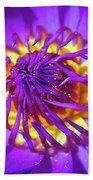 Purple Water Lily Macro Beach Towel