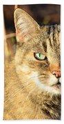 Purr-fect Kitty Cat Friend Beach Towel