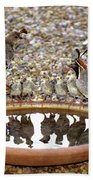 Quail Family Gathering Az Beach Towel