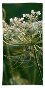Queen Anne's Lace In Green Horizontal Beach Towel