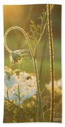 Queen Anne's Lace Sunset Beach Towel