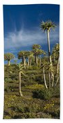 Quiver Tree Forest Beach Sheet