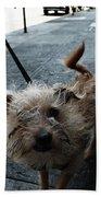 Rabid Dog Beach Towel