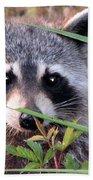 Raccoon 3 Beach Towel