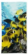 Raccoon Butterflyfish Beach Towel