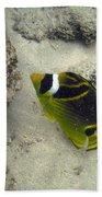 Raccoon Butterflyfish Beach Towel