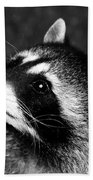Raccoon Looking Beach Towel
