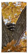 Raccoon Nape Beach Towel