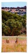 Nine Racing Whitetail Deer Beach Towel