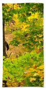 Racoon In Fall Trees Beach Towel