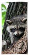 Racoons In Tree Beach Towel