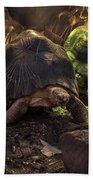 Radiated Tortoise Beach Towel