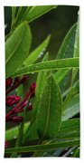 Rain Coated Blades Of Grass And  Deep Pink Petals Beach Towel