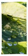 Rain Collecting On Hosta Leaves Beach Towel