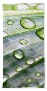 Rain Drops On A Leaf Beach Towel